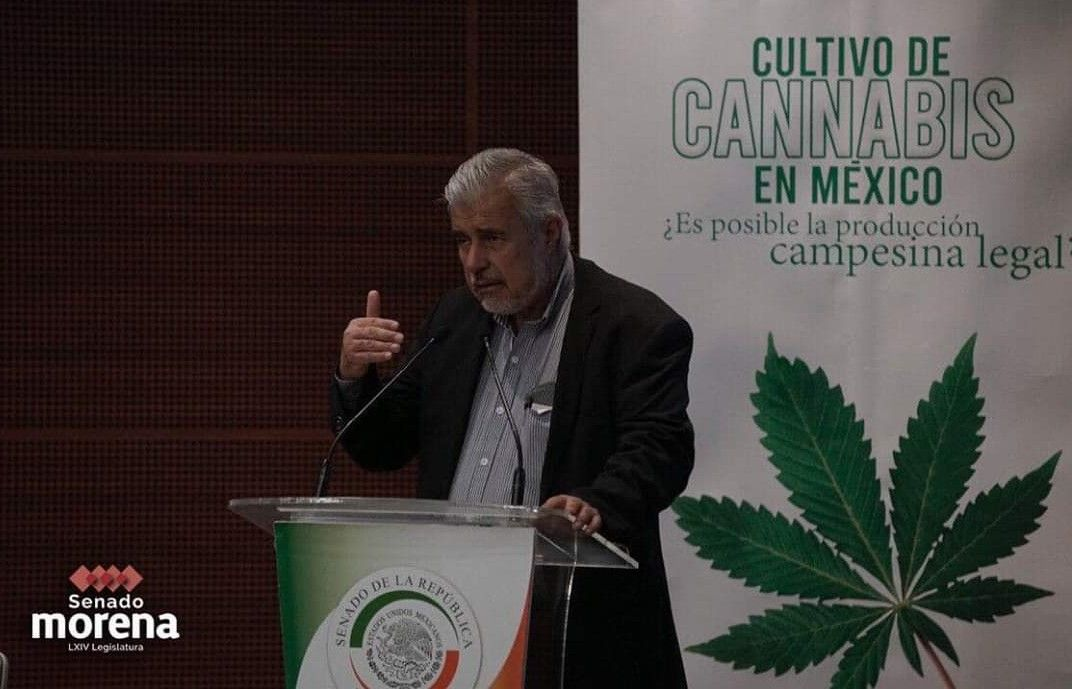 Entrará Senado a debate final en la regulación del cannabis