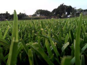 Vivero de morelos le ofrece pasto natural en rollo,manejamos diferentes tipos de pastos: Pasto san agustin,pasto cuernavaca,pasto grama/gramilla,pasto bermuda,pasto kikuyo,pasto tapete,pasto alfombra,pasto japones,pasto frente de toro,pasto peruano,entre otros mas. Canchas de futbol,campos de golf,campos de beisbol,parques,hoteles,areas verdes,jardines,camellones,taludes,deportivos. Enviamos a cualquier