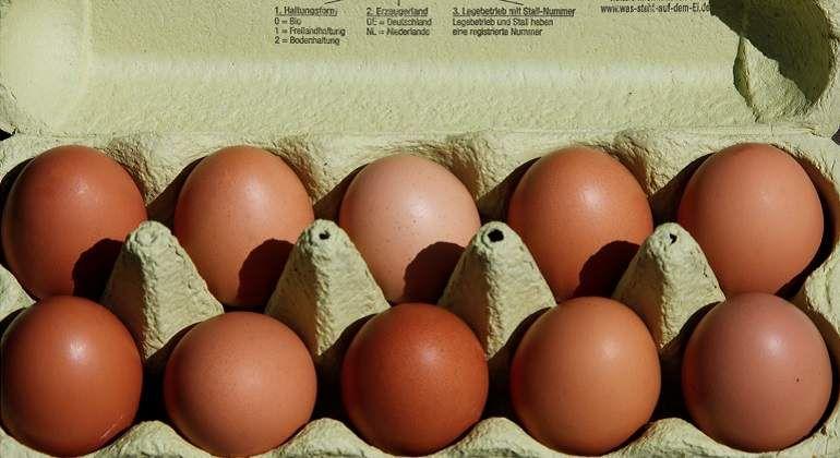 AMPLIACION: Encuentran otras dos toneladas de huevo contaminado en Dinamarca